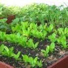 4 Easy to Grow Garden Plants